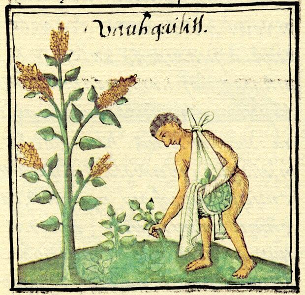 colectando-hierbas